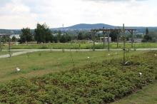 Otwarcie Ogrodu Botanicznego